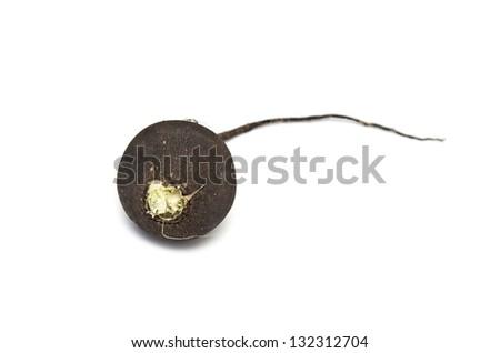 black radish on white background - stock photo