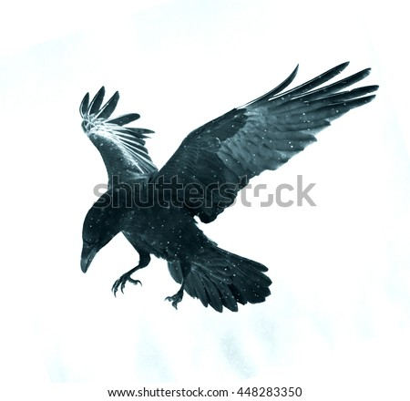the raven gothic elements Free essay: religion as a gothic element in american romanticism american romanticism can be strongly defined through its use of gothic elements webster's.