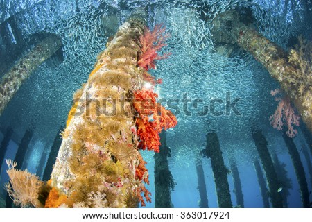 Black Rock Jetty, underwater in Aqaba, Red Sea, Jordan. - stock photo