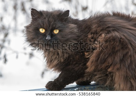 black, shaggy stray cat with yellow eyes