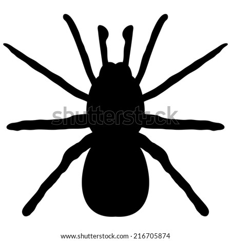 black silhouette of a spider on a white background - stock photo
