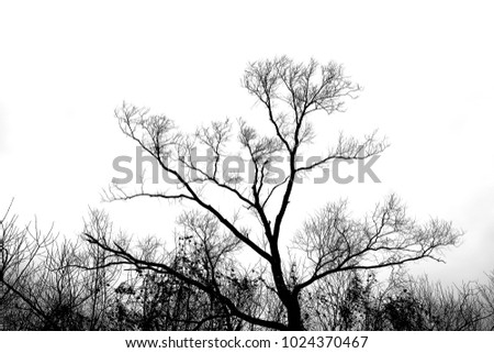 Black silhouette of a tree on a white background.