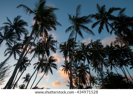 Black silhouette of trees against the backdrop of the ocean at sunset. - stock photo