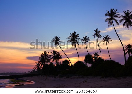 Black silhouettes of palm trees against the sky painted in sunset colors