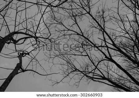 Black Sky twigs Halloween night for background