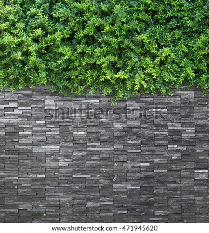 Black slate wall with Green leafs