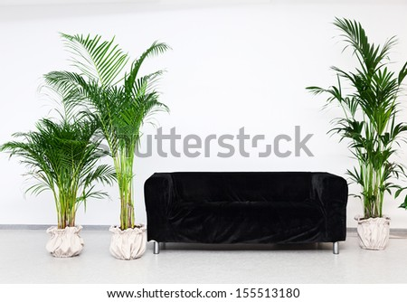 Black sofa in modern minimalism interior with green plants - stock photo