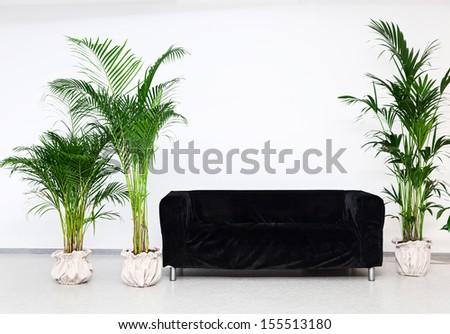 Black Sofa In Modern Minimalism Interior With Green Plants