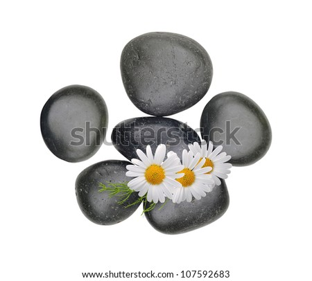 Black spa stones with chamomiles isolated on white background