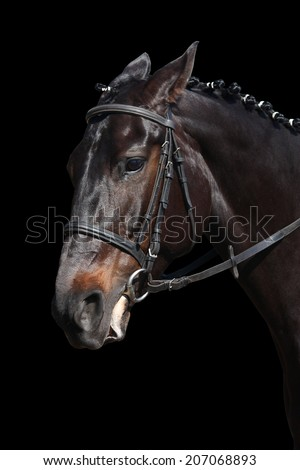 Black sport horse portrait isolated on black background