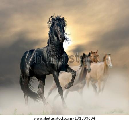 black stallion - stock photo