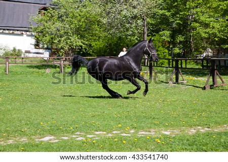 Black stallion galloping across a meadow.