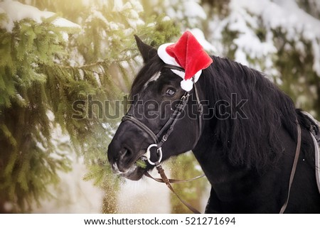 Black stallion in a red Santa Claus hat eats fir-tree branches