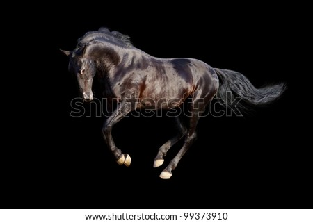 black stallion isolated - stock photo