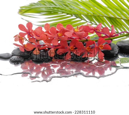 Black stones and branch orchid and palm leaf background - stock photo