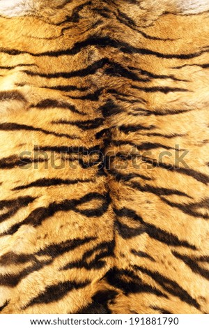 black stripes  tiger pelt, real fur texture on animal - stock photo
