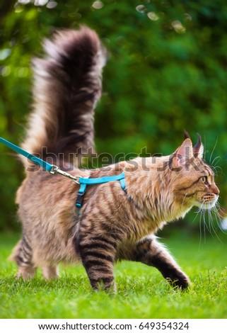 Adventure cat harness