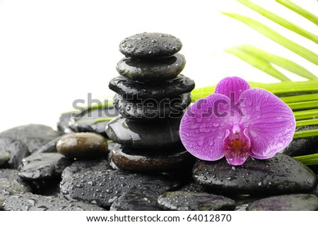 black towel stones with green plant and orchid in water drop