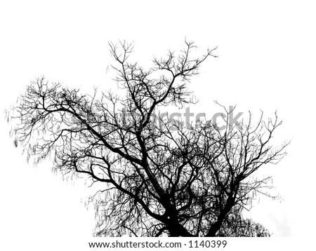 Black tree on the white background