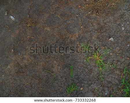 Black wet dark soil with small crack pattern, and thin green leaf grass growing background