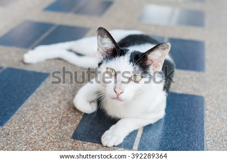 Black & White asia cat on tiled floor,selective focus on its eye - stock photo