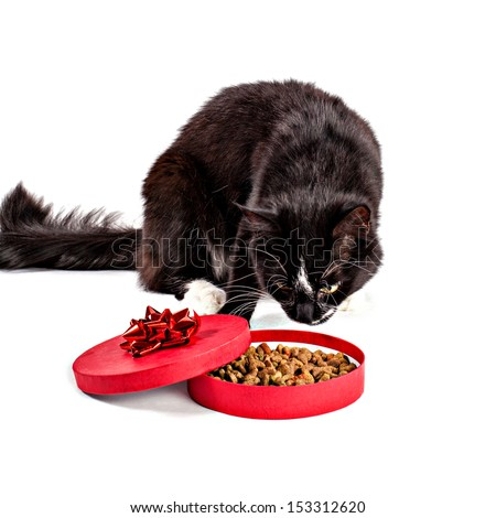 Black-white cat smelling feed in a gift box - stock photo
