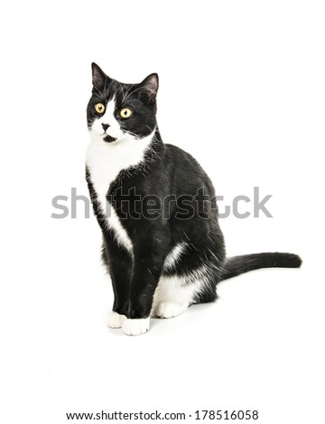 Black & White crossbreed cat isolated on white