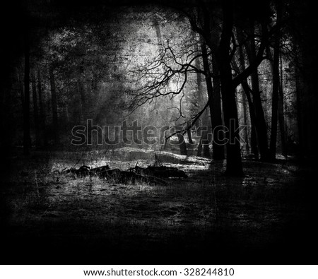 Black White Forest - stock photo