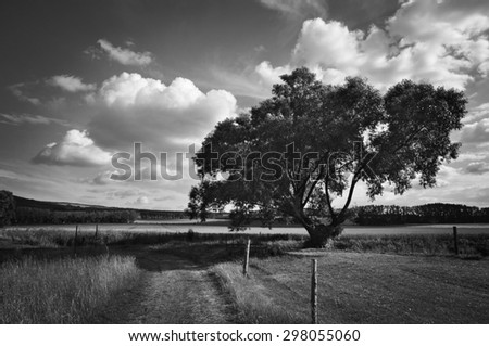 Black white landscape, willow tree summer countryside - stock photo