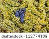Black wine grape in the middle of white grapes - stock photo