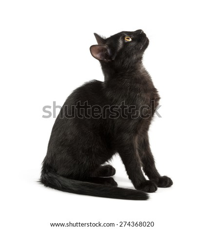 black young cat looks up, shot on white background - stock photo