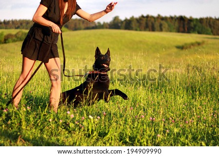 Black young german shepherd - obedience training