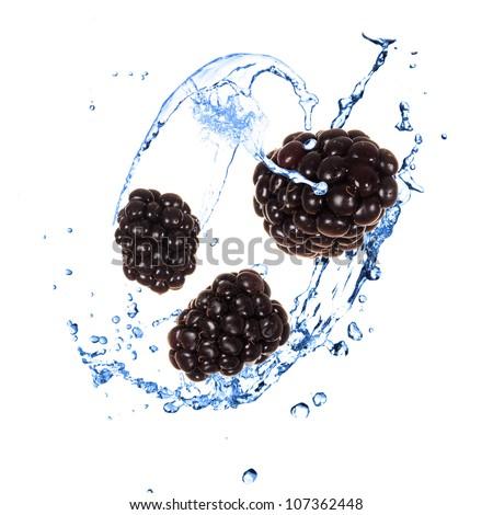 Blackberies with water splash over white - stock photo