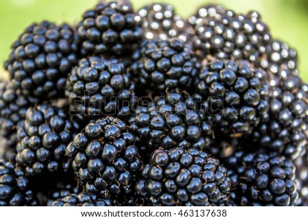 Blackberries closeup on the nature background