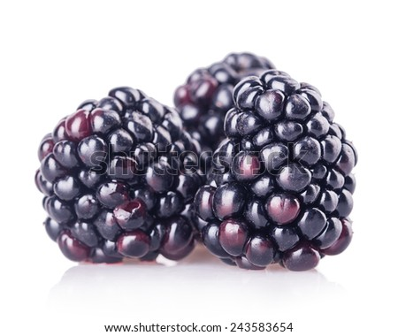 blackberries Isolated on white background - stock photo