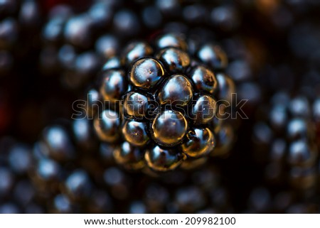 Blackberries. Macro image. - stock photo