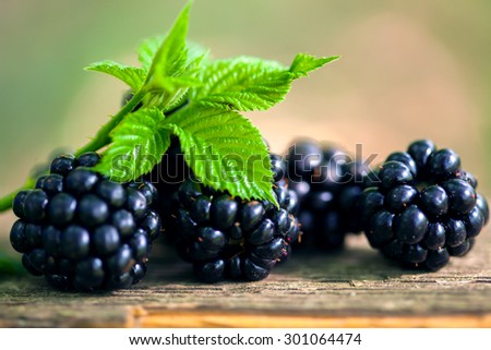 Blackberries. Macro image with selective focus. - stock photo
