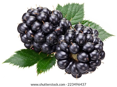 Blackberries with leaves isolated over white background. Macro shot.
