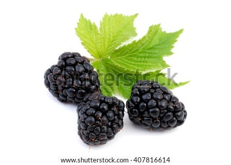 Blackberry. Blackberry with leaf.Blackberries. Blackberry isolated on white, Blackberry on white background. Blackberries. Blackberry  fruit. Blackberry food. Blackberries.   - stock photo
