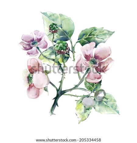 Blackberry Flower - stock photo