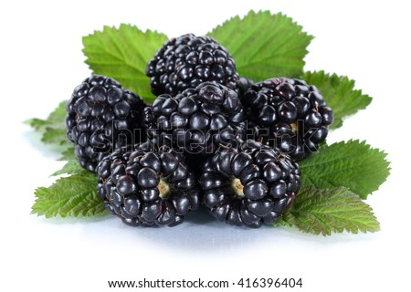 Blackberry fruit blackberries berry berries fruits isolated on a white background - stock photo