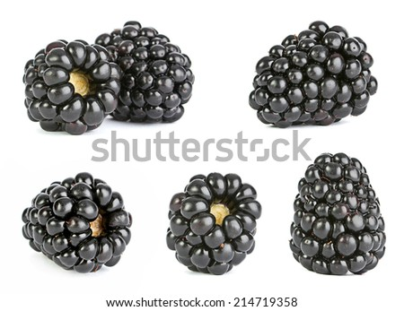 Blackberry fruit closeup isolated on white - stock photo