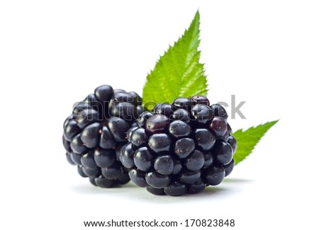 Blackberry fruit with leaf closeup isolated on white - stock photo
