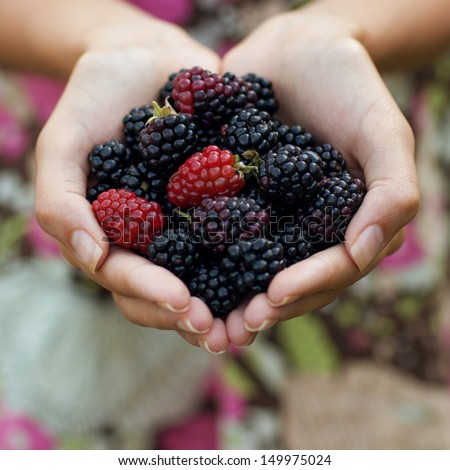 Blackberry in hand - stock photo