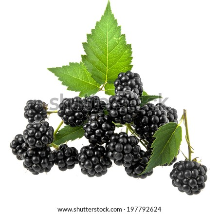 blackberry on a white background - stock photo