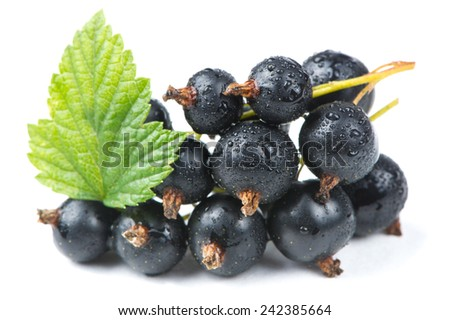 Blackcurrants with a green leaf and water drops isolated on a white background - stock photo