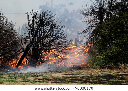Blackened leafless bushes against a background of fire and smoke stand as stark testament to the heat of the fire that devoured what once was a two story wood framed building. - stock photo