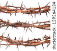 Blackthorn branches - stock photo