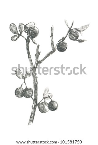 BLACKTHORN. Picture of fruit / vegetables. (This is the original artwork - black marker pen with a hard tip.) - stock photo