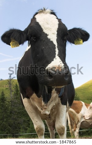 blacky - stock photo